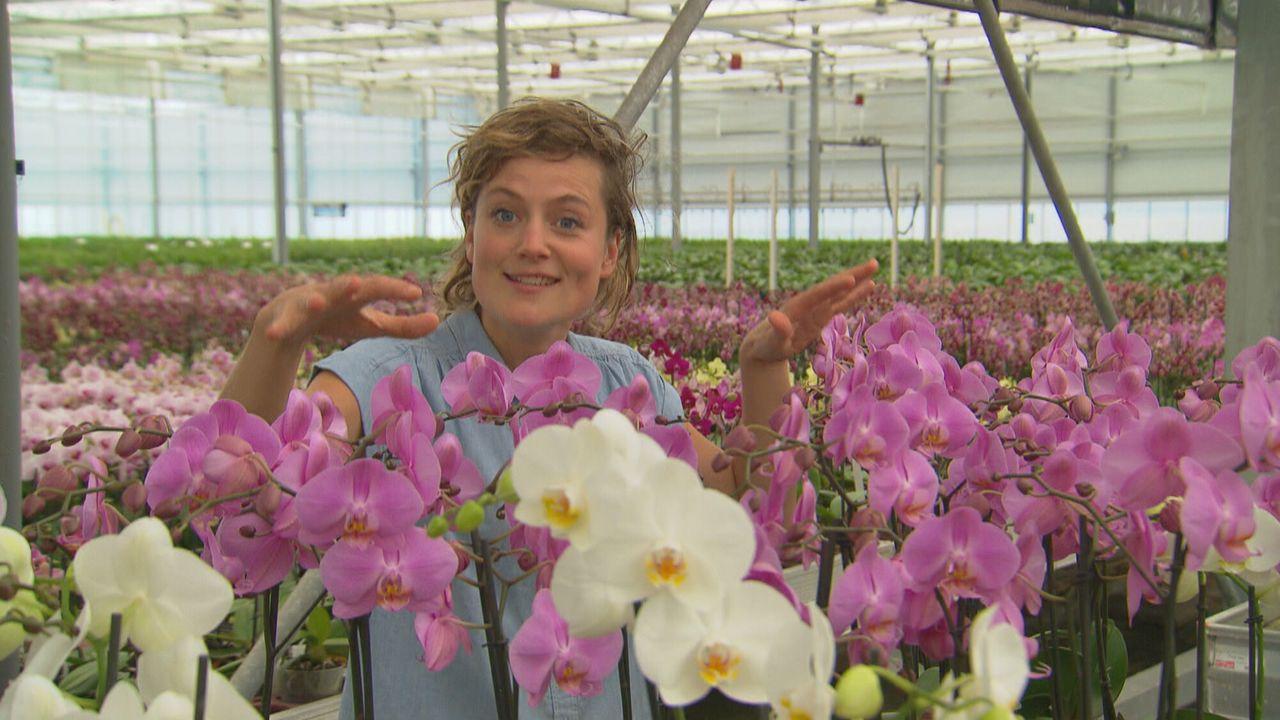 Het Klokhuis - Orchidee