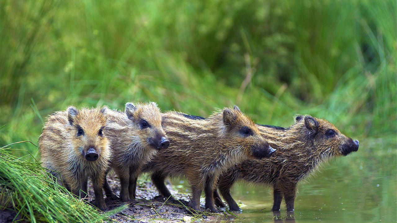 Wild Op De Veluwe - Het Wilde Leven