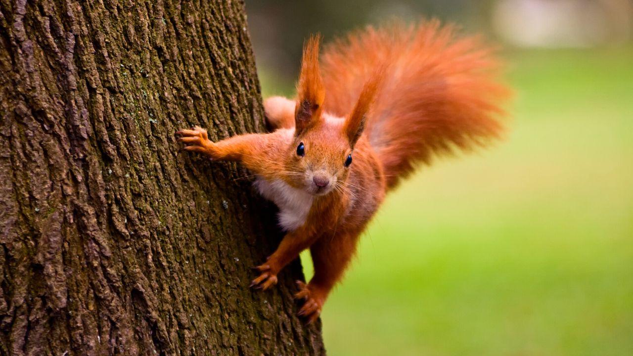 Natuur Op 2 - Supereekhoorns