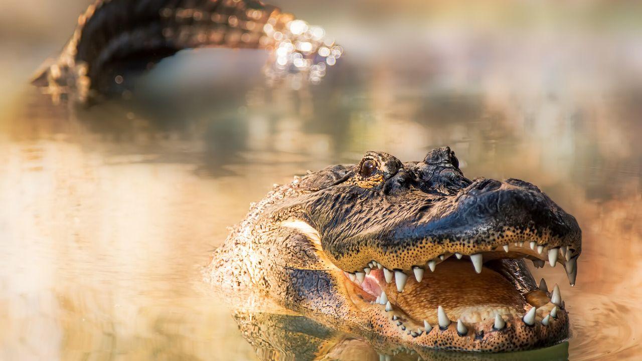 Natuur Op 2 - Florida - Het Dierenparadijs Van Amerika