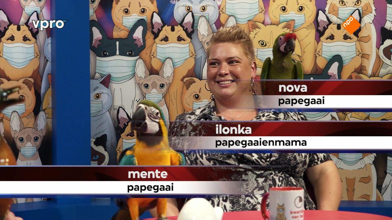 Kwartier van het dier - corona edition Seizoen 1 Afl. 1 - Kwartier van het dier - corona edition