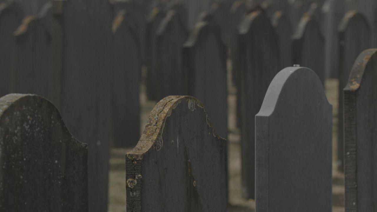Dood Voor Beginners - Het Olifantenkerkhof