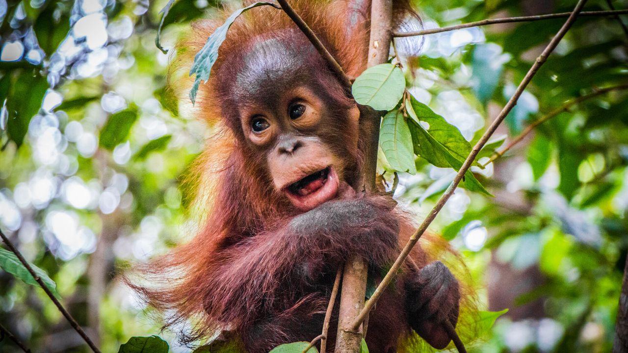 Dodelijk 360 - Borneo