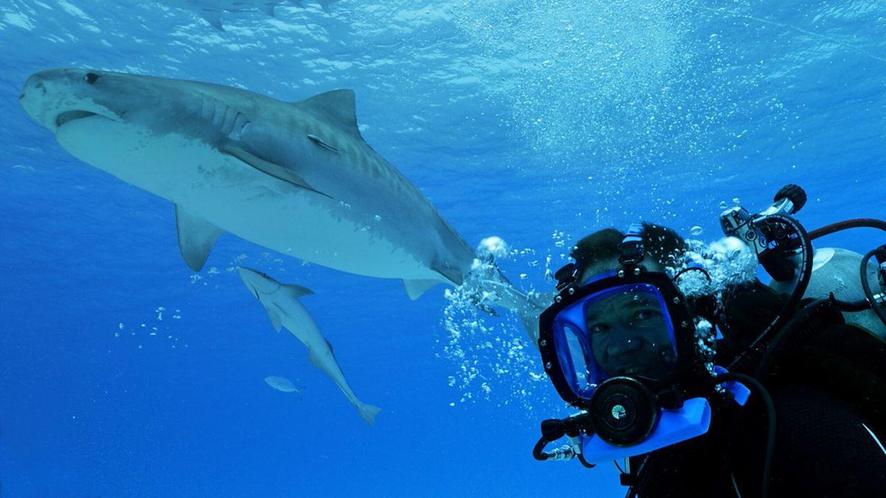 Dodelijk 360 Haaien special