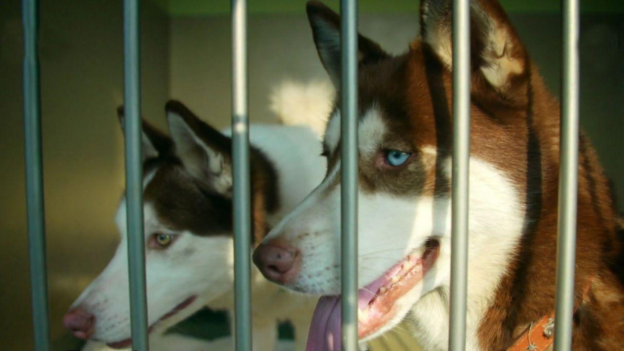 The Dog House - The Dog House