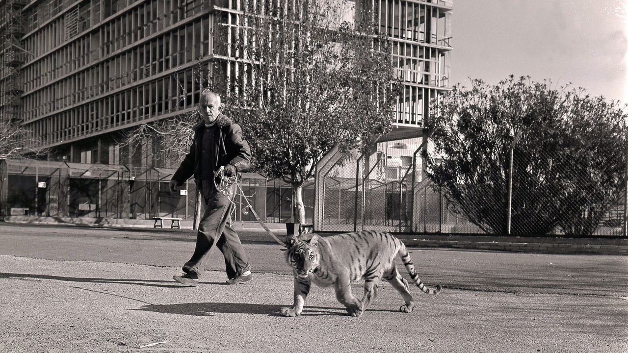 Er Zijn Geen Leeuwen In Tel Aviv - Er Zijn Geen Leeuwen In Tel Aviv