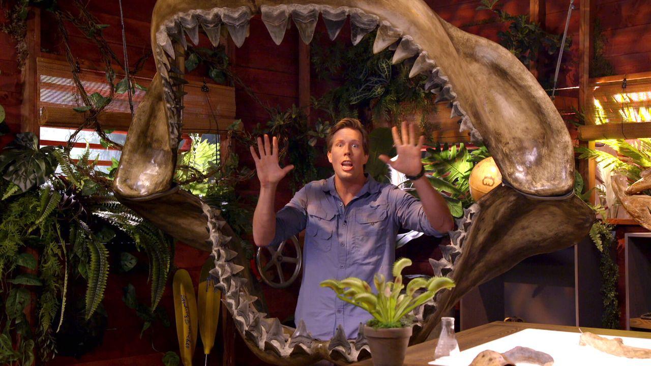 Freeks Jungle School Witte haai
