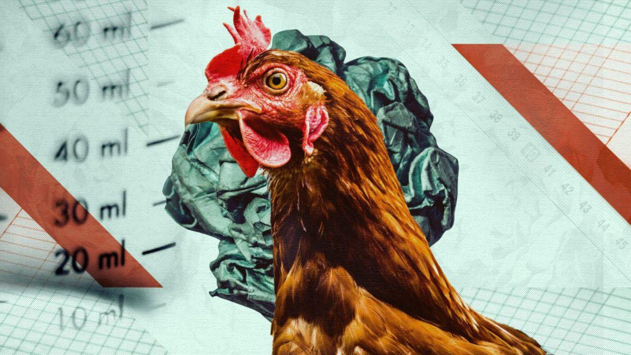 Zembla - Het Kippenexperiment