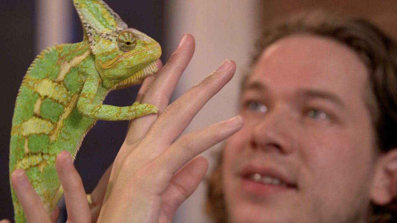 Het Klokhuis - Reptielen