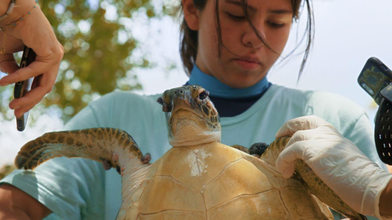 Zapp Echt Gebeurd Julieta & de schildpadden in de plastic soep