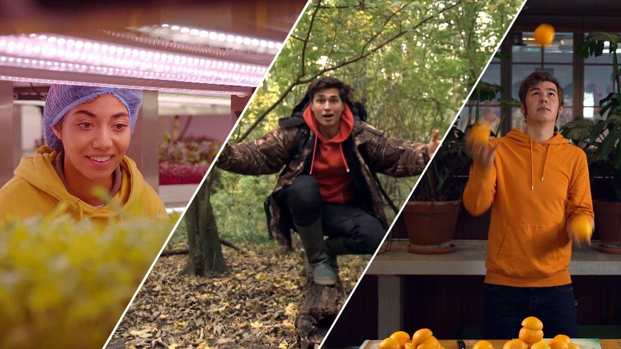Zapp Your Planet - Mayonaise Van Sinaasappelschillen, Verticaal Tuinieren En Boombommen