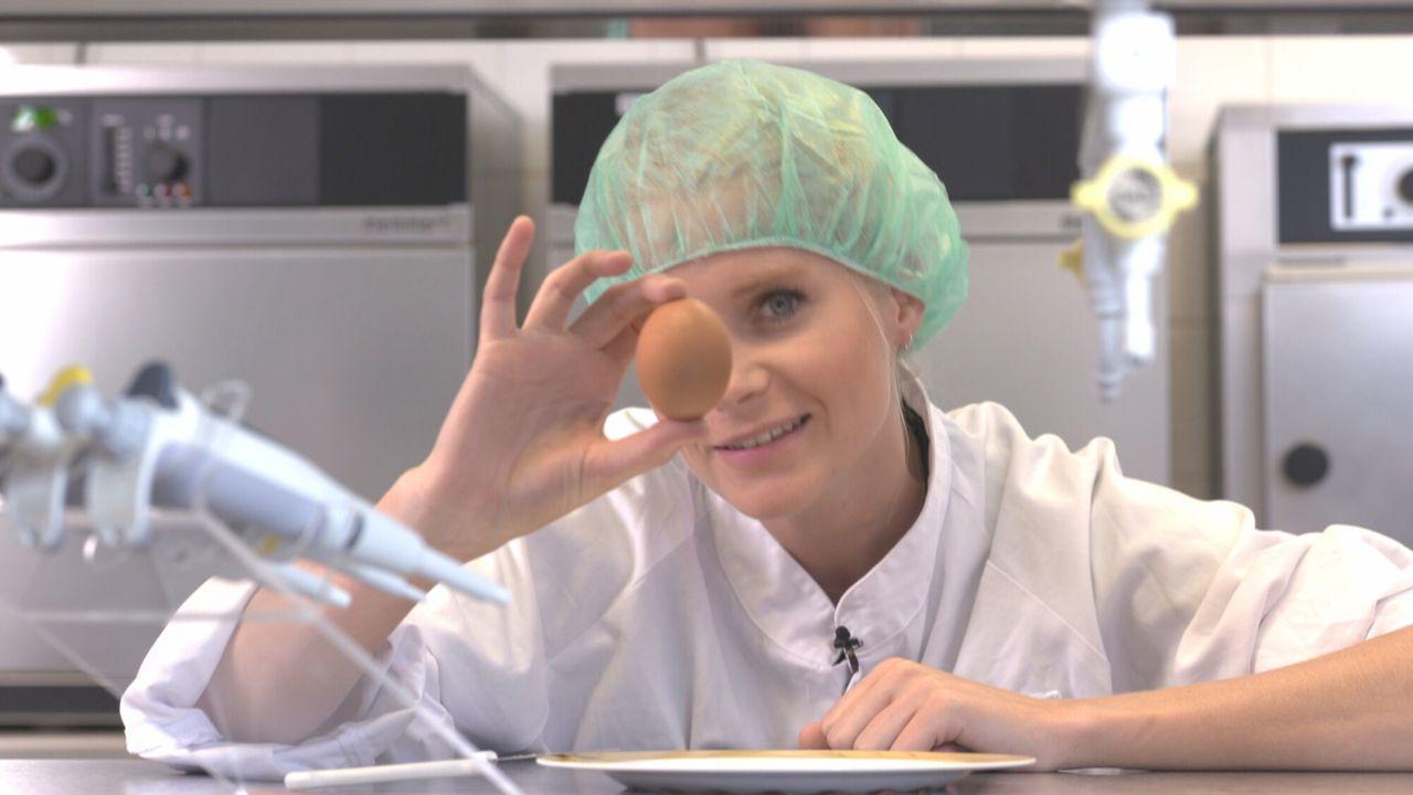 Het Klokhuis - Eierfabriek