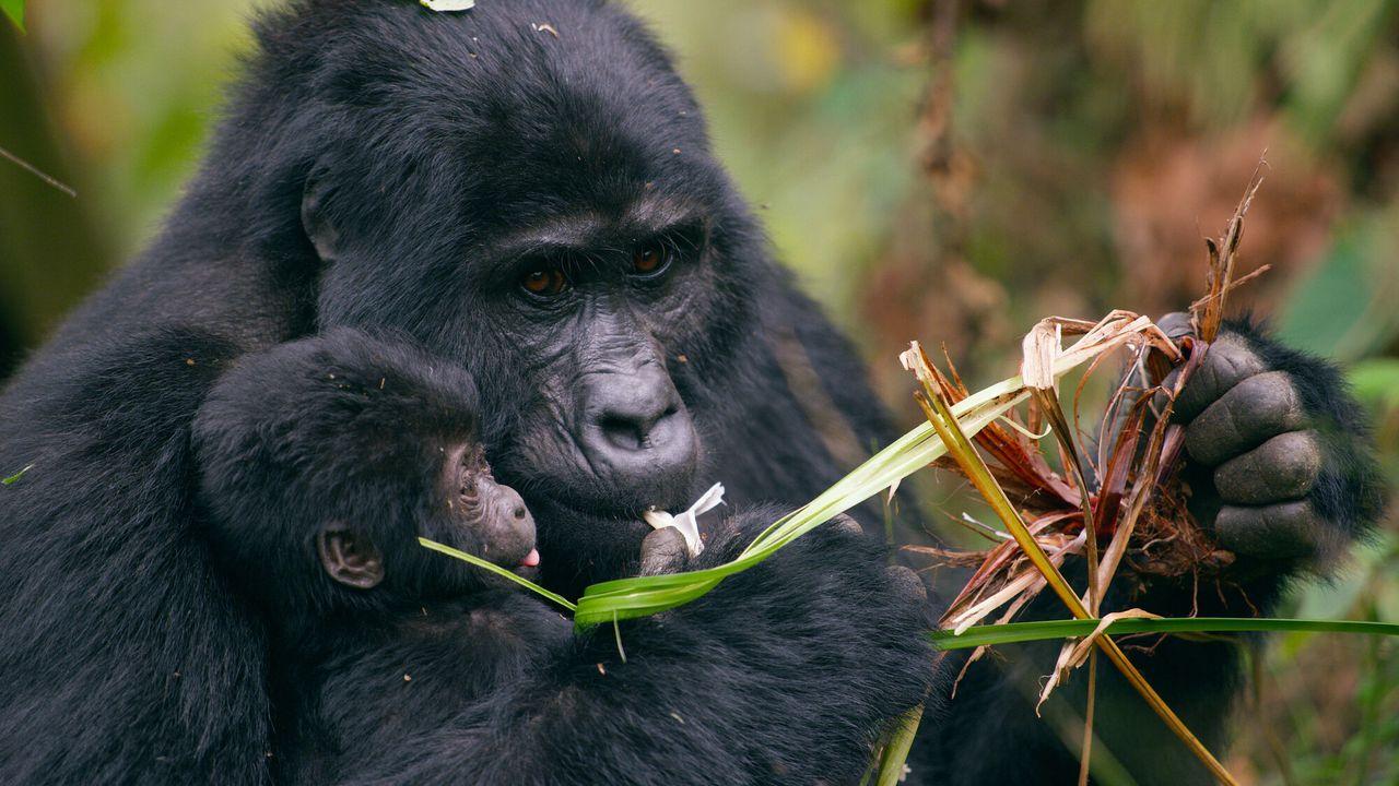 Animal Babies: First Year On Earth - Babydieren In Hun Eerste Jaar