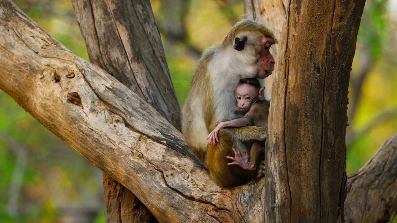 Animal Babies: First Year On Earth - Natuur Op 2: Babydieren In Hun Eerste Jaar