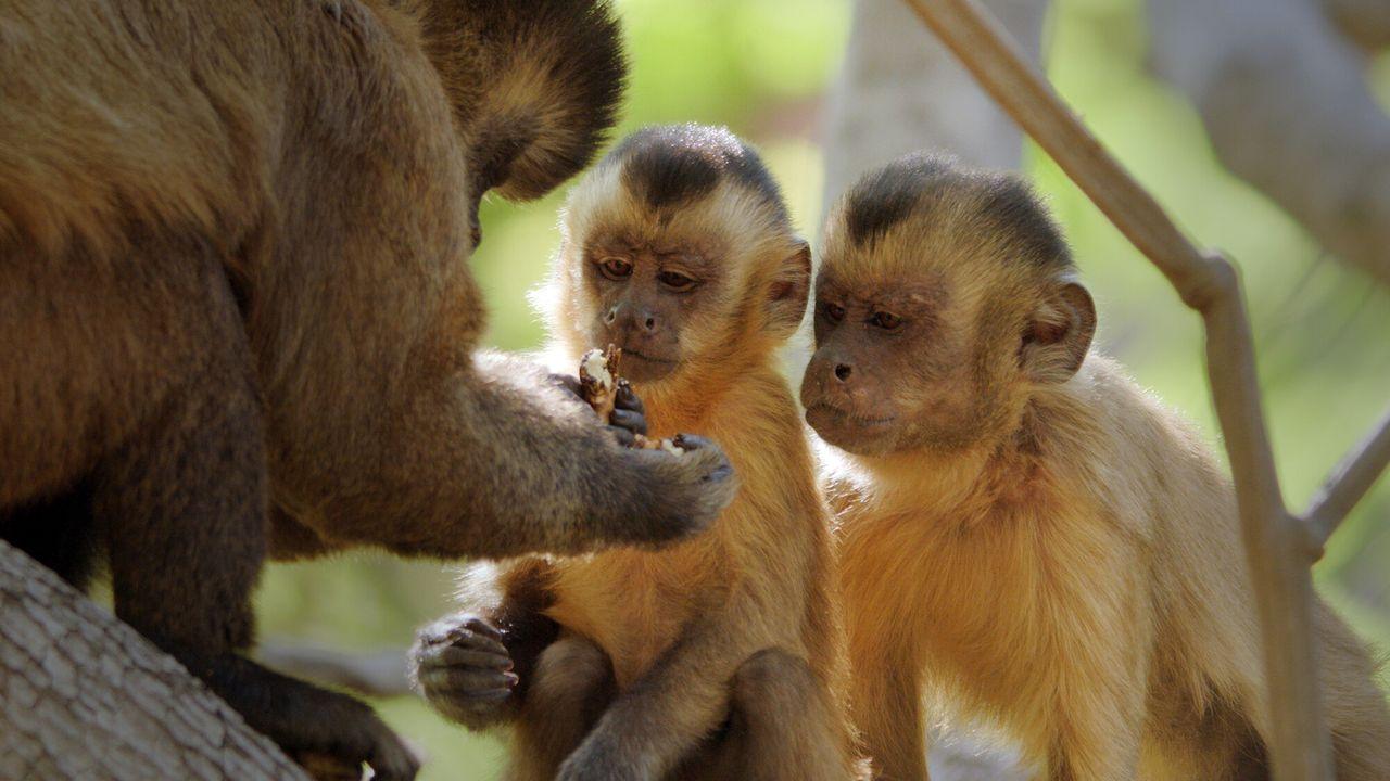 Primates Het geheim van overleven