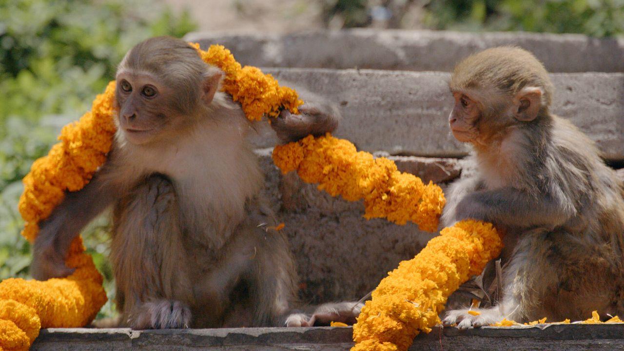 Primates - Familiekwesties