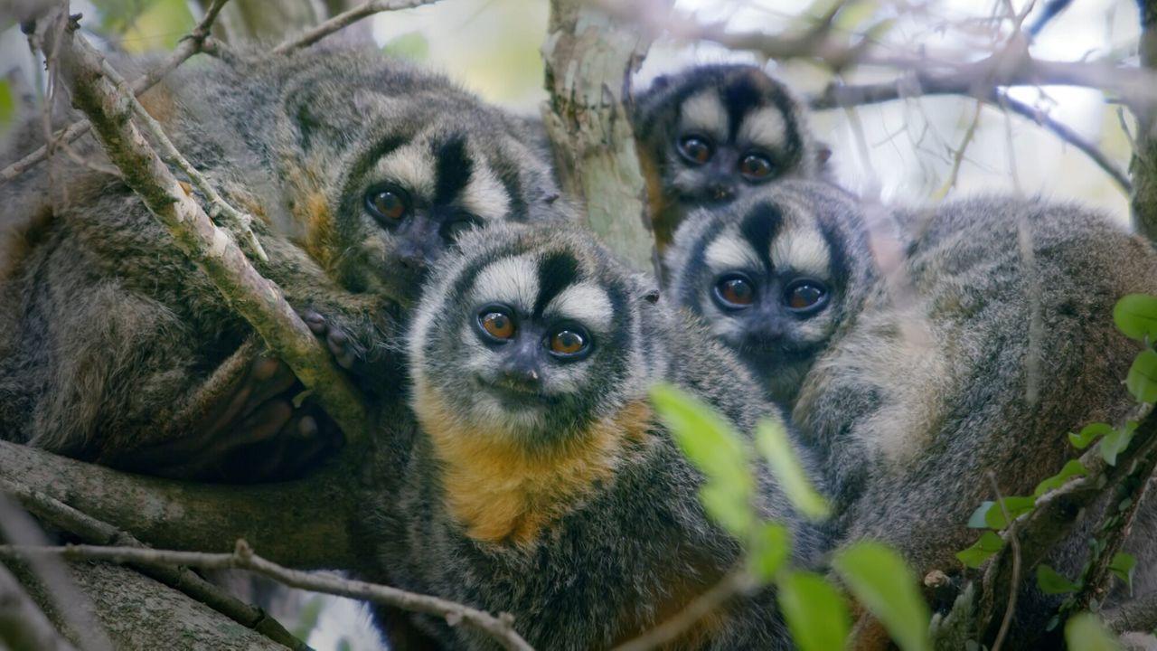 Primates - Bedreigde Primaten