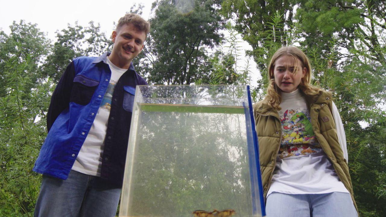 Steken En Prikken - De Geelgerande Waterroofkever
