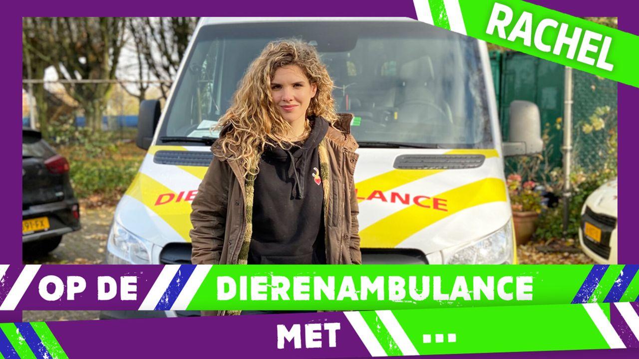 Op De Dierenambulance Met - Rachel Rosier