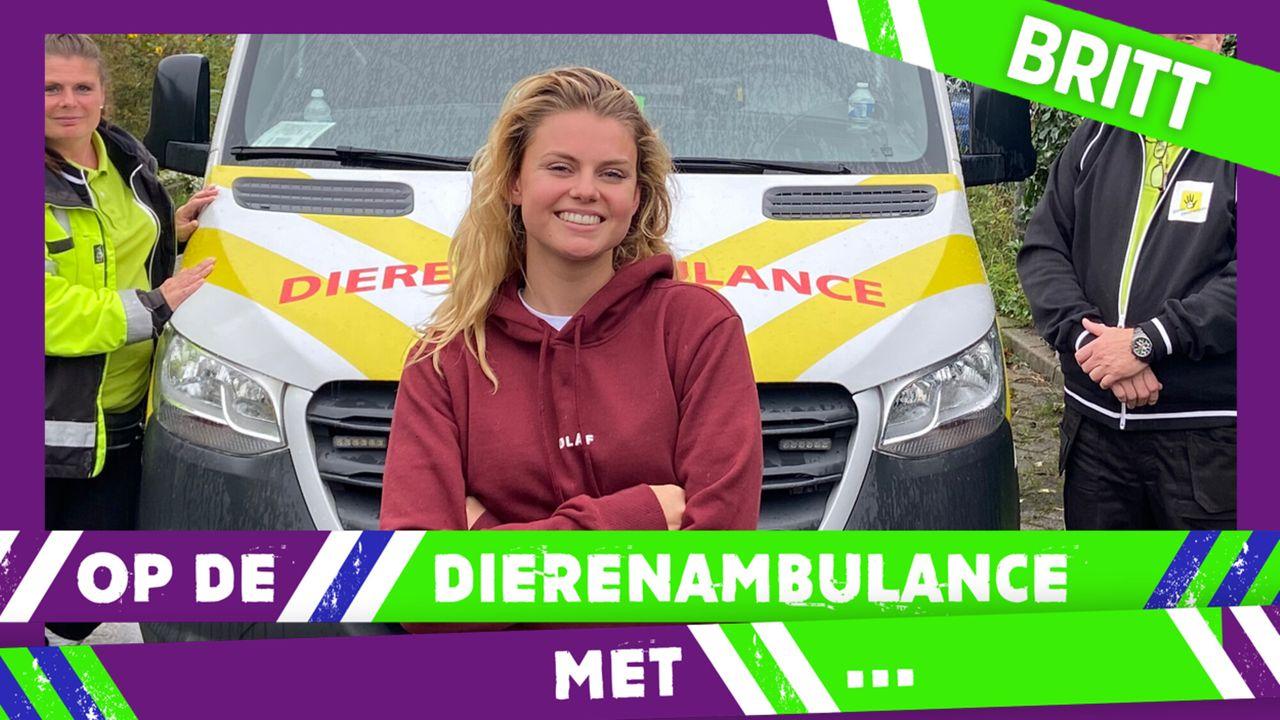 Op De Dierenambulance Met - Britt Scholte