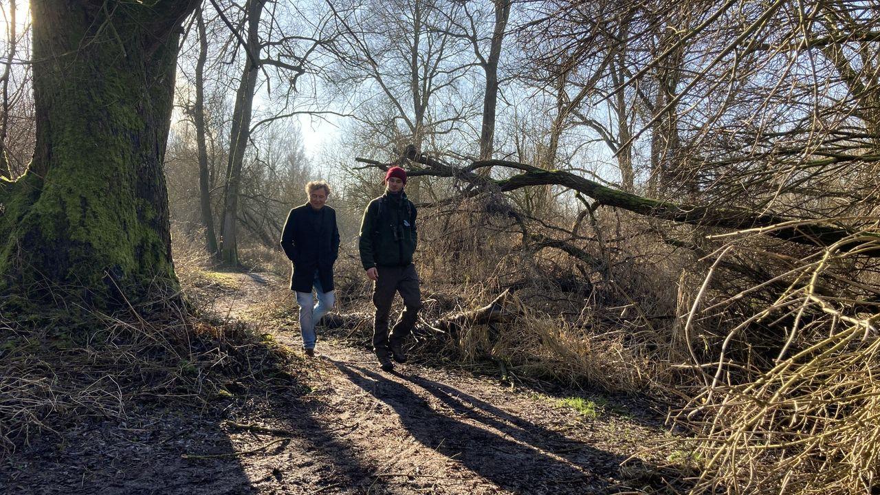 Nederland plant bomen Het bos als thuisbasis