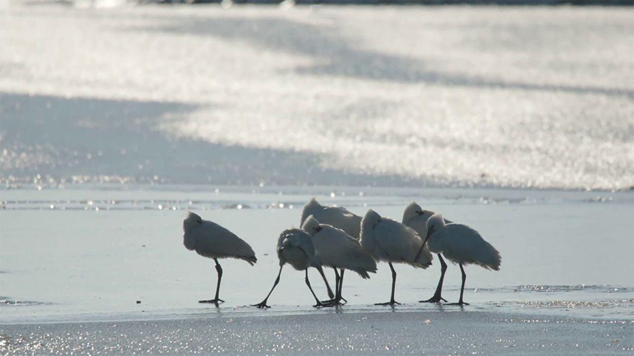 Vroege Vogels Tv - Volop Natuur In De Winter