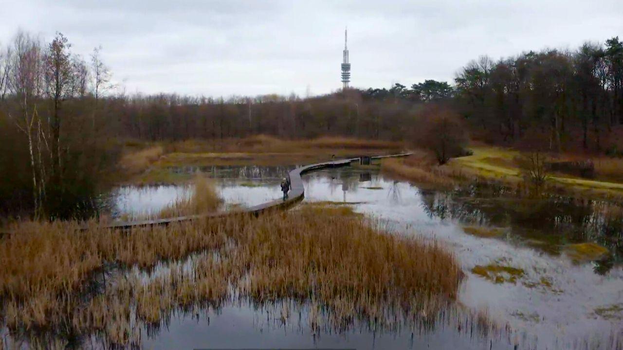 Vroege Vogels Tv - Goois Natuurreservaat