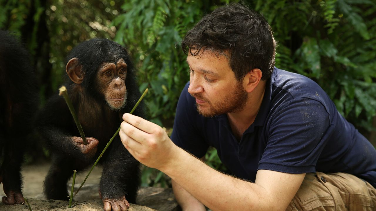Baby Chimp Rescue - Baby Chimp Rescue