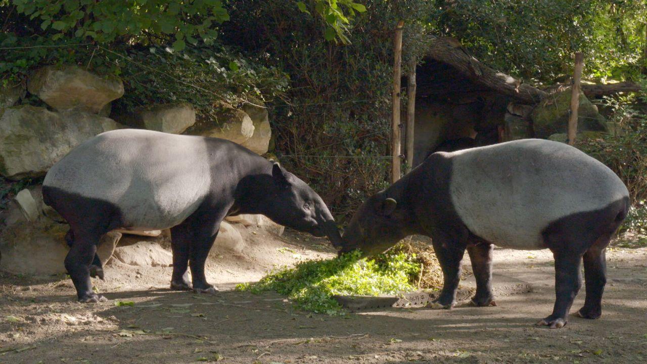Het echte leven in de dierentuin Het echte leven in de dierentuin