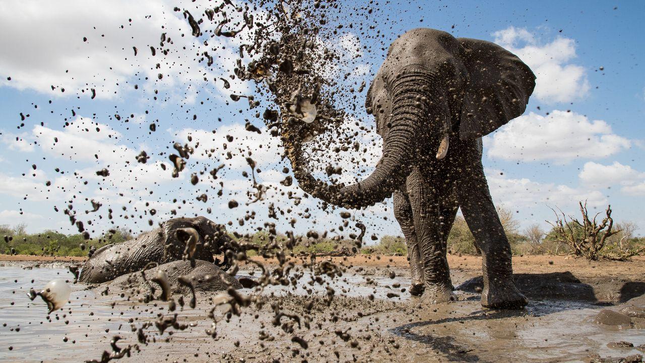 Waterhole: Africa's Animal Oasis - Waterhole: Africa's Animal Oasis