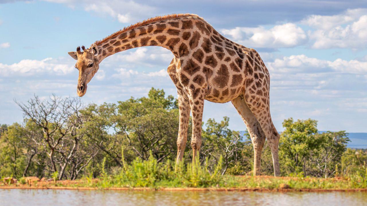 Waterhole: Africa's Animal Oasis Waterhole: Africa's Animal Oasis