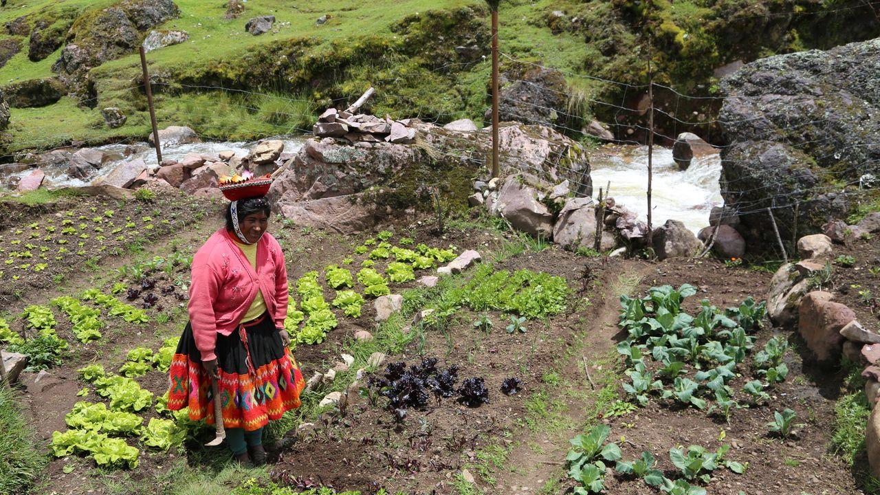 Wilde Ganzen - Peru