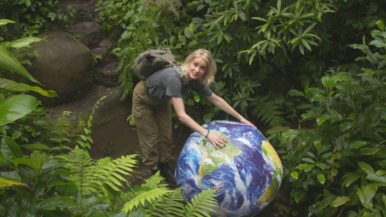 Het Klokhuis Tropisch regenwoud