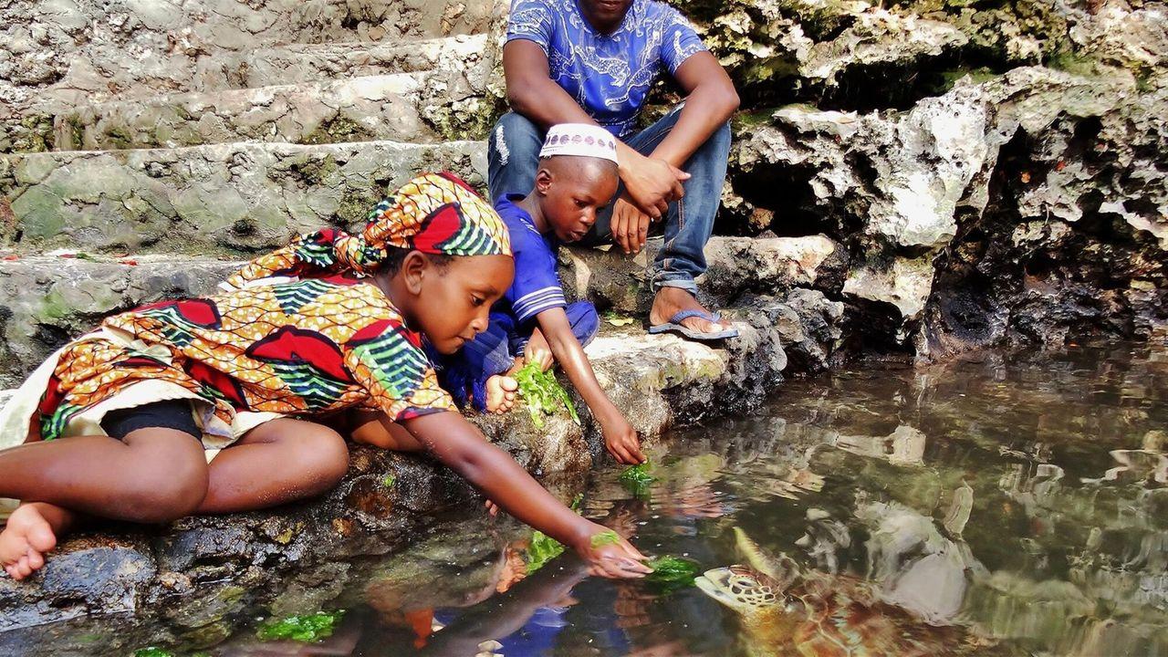 De Avonturen Van Awena En Abduli - Zeeschildpadden