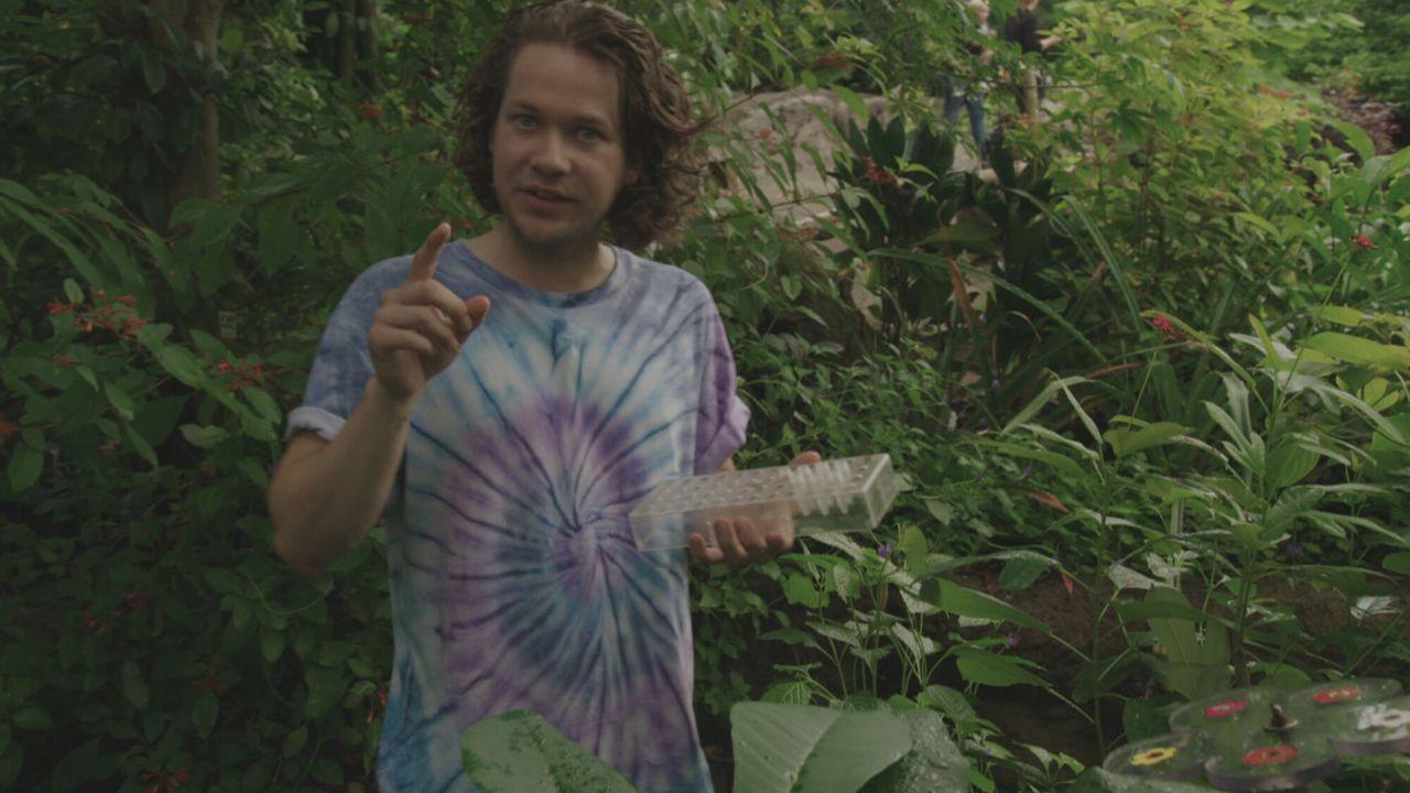 Het Klokhuis - Vlinders