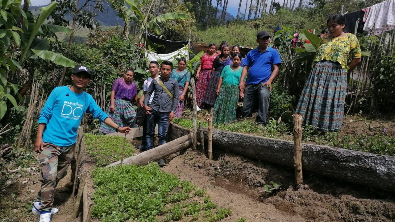 Wilde Ganzen - Guatemala