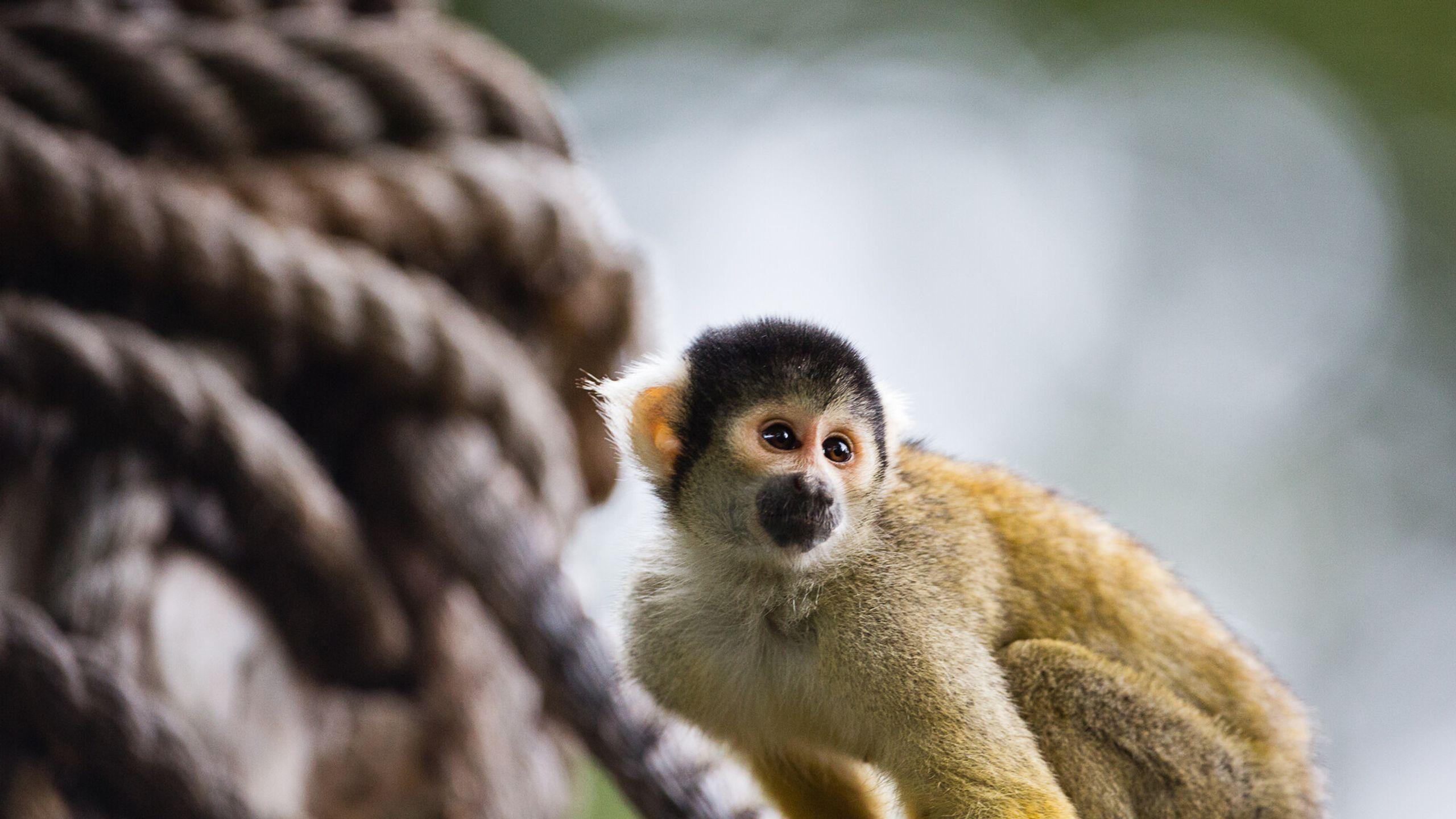 De London Zoo