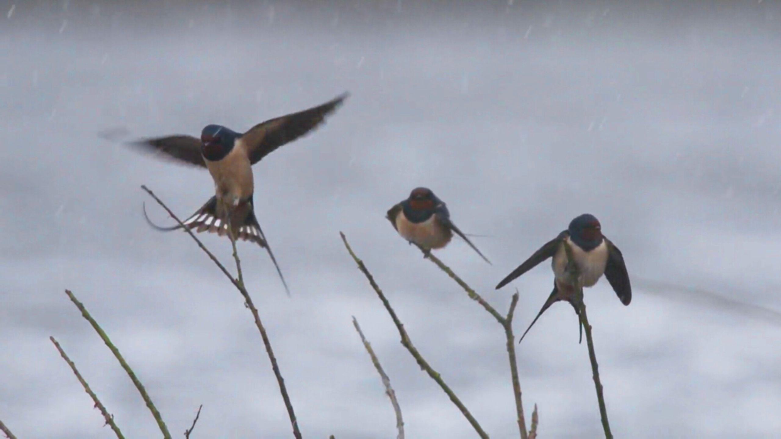 Vroege vogels